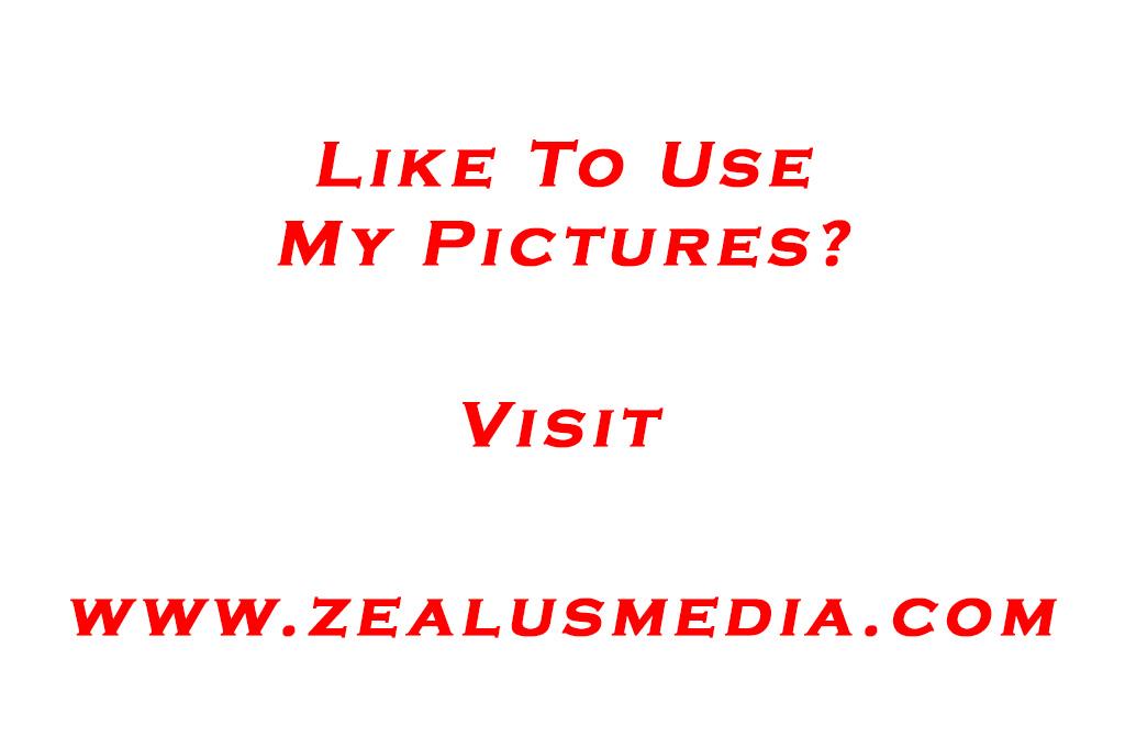 Golden Goddess - photo by ZealusMedia.com